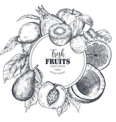 frame with hand drawn fresh fruits vector image