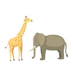 Giraffe and elephant cartoon african vector