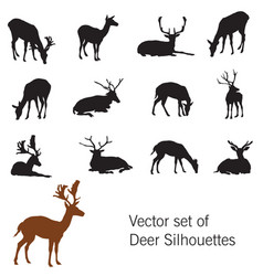 set of deer silhouettes vector image