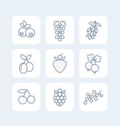 Berries icons set in linear style on white vector