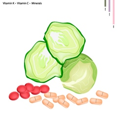 Fresh Cabbage with Vitamin K and Vitamin C vector image