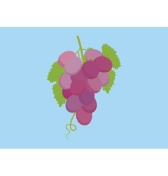 Grape violet isolated with green leaf and blue vector
