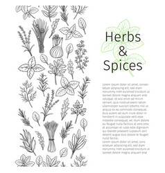 herbs and spice seamless border vector image
