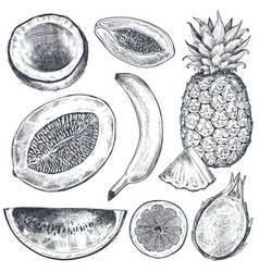 Set hand drawn fresh fruits in sketch style vector