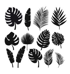 Set of black silhouettes of tropical leaves palms vector