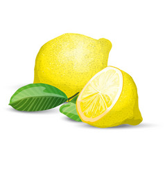 lemon fresh composition vector image