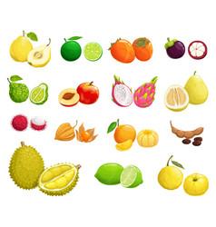 cartoon fruit icons natural exotic food set vector image