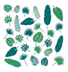 collection tropical leaves nature elements vector image