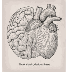heart with half brain of human together hand vector image