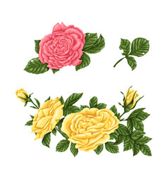 Set of pink yellow roses bouquets flowers and vector