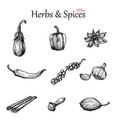 herbs and spices hand drawing vintage style vector image