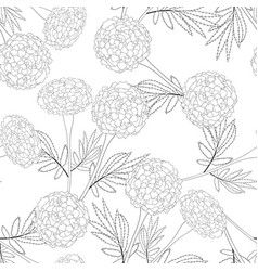 marigold outline on white background vector image