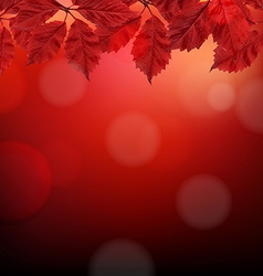 Red Autumn Background With Leaves vector image