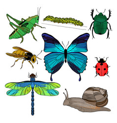 colorful drawing insects collection vector image