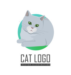 cute grey cat vector image vector image