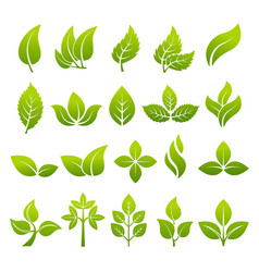 stylized plants to design logos vector image vector image