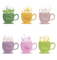 A set of tea made from herbs mint lemon balm vector