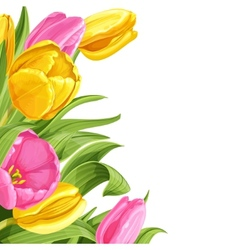 Background of pink and yellow tulips on white vector