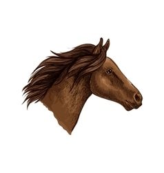 Brown horse head isolated sketch vector image