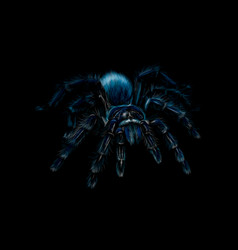 portrait of a spider tarantula grammostola on a vector image