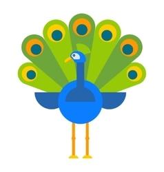 Beautiful peacock colorful bird vector