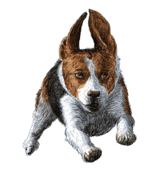 Flying beagle 01 vector