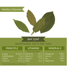 Healthy collection bay leaf vector