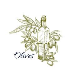 Olive oil with fresh fruit sketch for food design vector