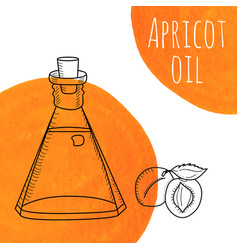 hand drawn apricot oil bottle with orange vector image vector image