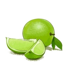 Ripe lime and slice vector image vector image