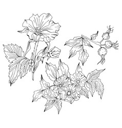 Doodle flower set with rosa canina flower and buds vector