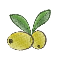 Drawing two green olive leafs organic food vector