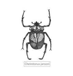 Macro detailed drawn insect vector
