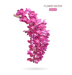 image of orchid flower vector image