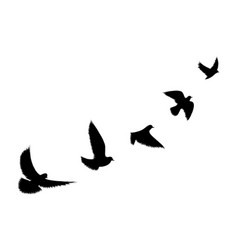 birds flying line black background vector image