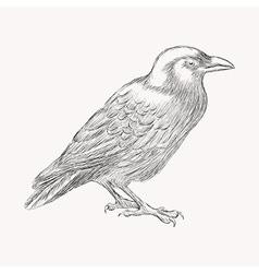 Black raven bird hand drawn vector