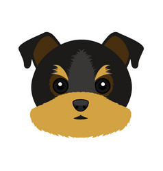 Cute yorkshire terrier dog avatar vector