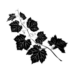 Grape Leaves baroque plants vector image