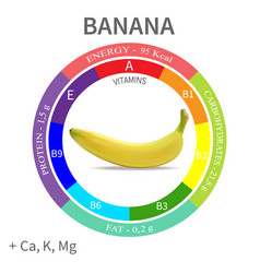 infographics about in banana vector image