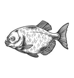 piranha fish sketch engraving vector image