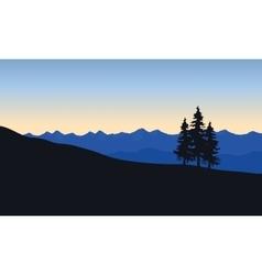 Silhouette of spruce in desert vector