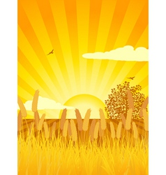 sunset cultivated landscape with corn tree and cul vector image
