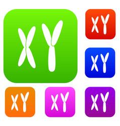 human chromosomes set color collection vector image