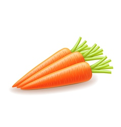 Carrot isolated on white vector image vector image