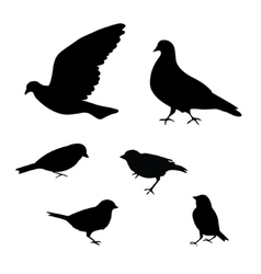Birds silhouette on white background vector image vector image
