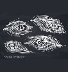 Set hand drawn chalk peacock feathers vector