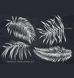 set hand drawn chalk tropical palm vector image