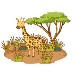 giraffe in savannah forest on white background vector image
