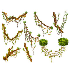 set twisted wild lianas branches jungle vine vector image
