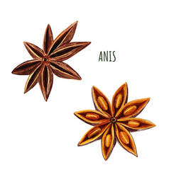 Set two anis stars hand drawn watercolor vector